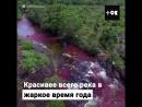 Каньо Кристалес река Пяти Цветов