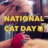COSMOPOLITAN KOREA 코스모폴리탄 on Instagram 오늘은 바로 냥데이🐱💕세계 고양이의 날입니다 캣데이를 기념해 냥집사 스타들을 코스모 가 모아모아봤어요 GD 송민호 설리 강다니엘 산다라박 김유정 효린 손담비 서강준 그리