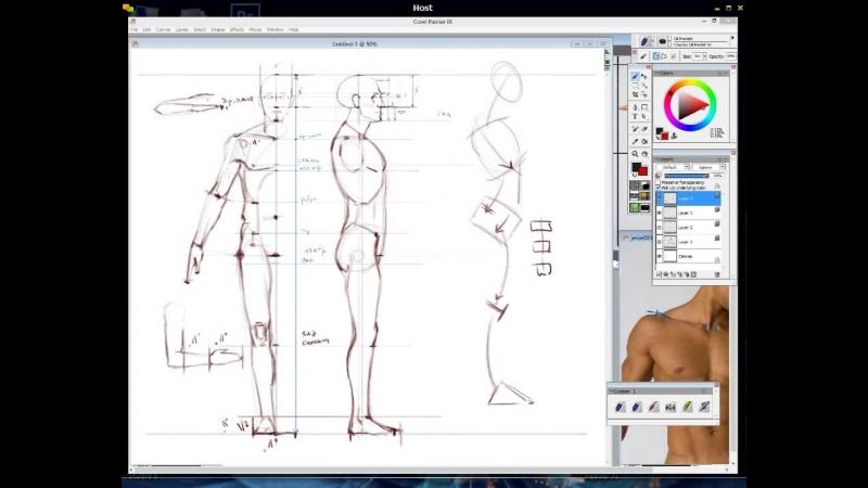 6. Пропорции тела 3