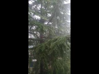 Дождь в субтропиках