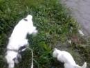 бездомный кот сопровождает моцарта на прогулке