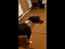 Эмми собака потеряшка