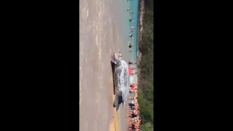 Огромная черепаха удивила туристов на пляже