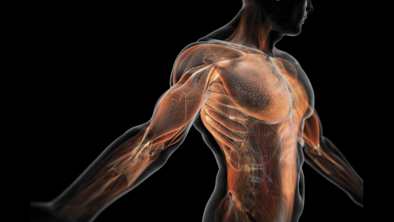 BBC 01 The Human Body Life Story Тело человека История жизни