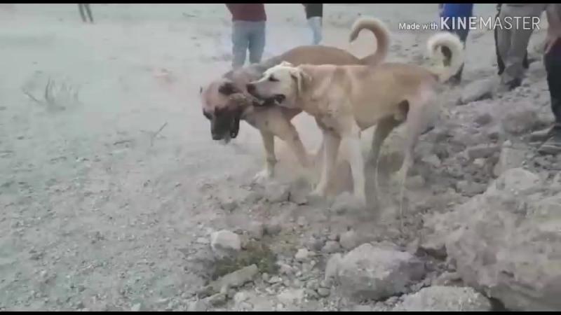 Maç yeni Nevşehir den ares kaymaklıdan dozer