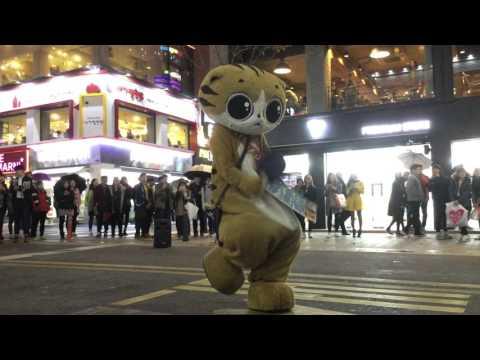 고양이 숭이 의 환상의 커플댄스 1