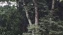 Pássaro Voa antes de Cantar. Quintal, Tiguera 360, Juiz de Fora. IMG_9779. 159,3 MB. 16h29. 08jul18