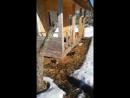 Щенки живущие под домом живодера