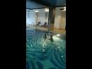Плавание Аквамарин. Лёня, 2, 6