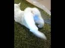 Оргазм кошки
