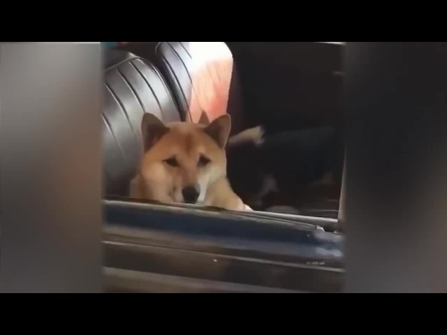 Dog sexy back coub