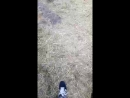 прыгают с парашутами 2