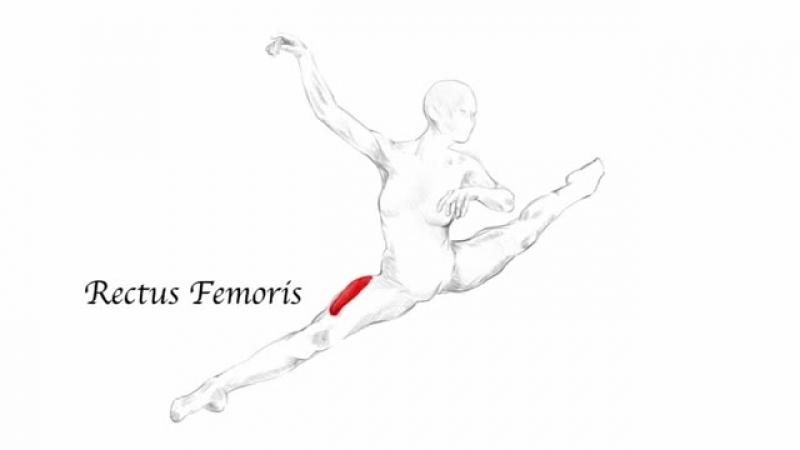 SLs Temps de Fleche Ballet Dance Muscle Anatomy Stretching Training Program
