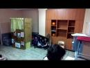 кошкин дом, милосердие-часть 2
