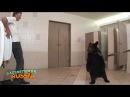Голые и Смешные. Медведь в туалете