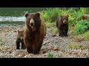 Trailer KAMCHATKA BEARS LIFE BEGINS Russia 2018 52 min