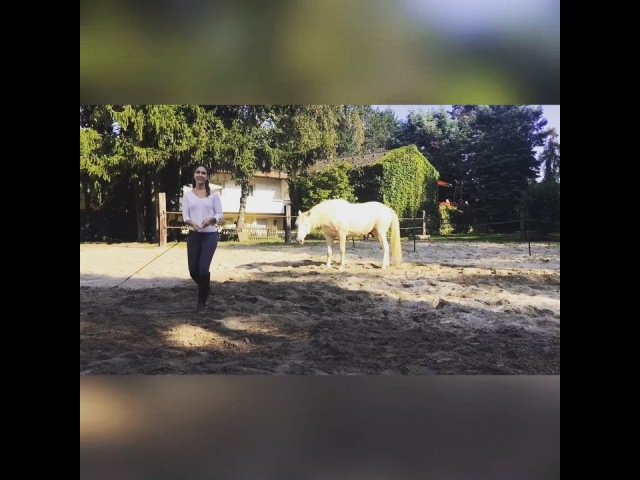 Kenzie Dysli on Instagram ostwind ostwind3 constantin samfilm sasou kenziedysli lovehorses libertyhorses naturalhorsemanship american