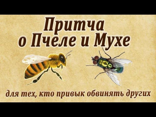 Притча о пчеле и мухе для тех, кто привык обвинять других!