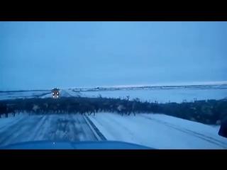 Миграция северного оленя в Якутии