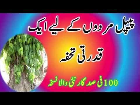 Peepal ky Phal Se Mani Ghari Karny Ka Nuskha In Urdu