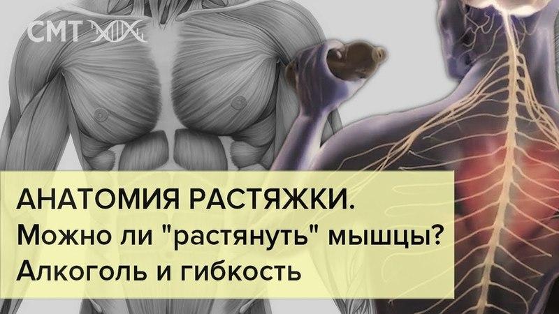АНАТОМИЯ РАСТЯЖКИ. Алкоголь, или гибкость за 5 минут? Мышцы, сухожилия и связки