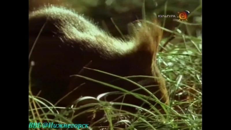 Наедине с природой . Лесная куница - Дух лесов