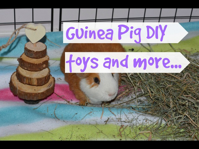 DIY GuineaPig Toys and more!