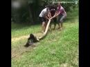 Мужики спасли собаку от анаконды