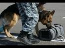 Точка зрения • К-9 Собачья работа в России