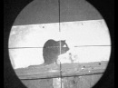 Pest Control with Air Rifles - Bro's Rat Missions