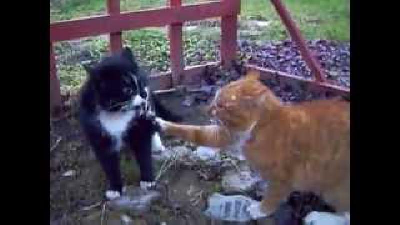 Жестокая разборка котов! Отпад и умора!