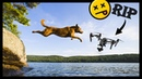 DRONES Vs ANIMALS Video contains VIOLENCE SHATTERED PROPELLERS that may offend DRONE LOVERS