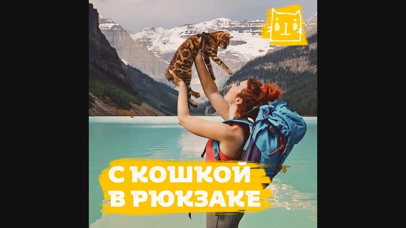 Кошка путешественница