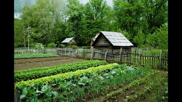 ОРГАНИЧЕСКИЕ УДОБРЕНИЯ СВОИМИ РУКАМИ Сделать удобрение для домашних растений и рассады самостоятельно - очень просто и выгодно. В ход пойдут отходы с кухни.Сначала обозначим перечень необходимых