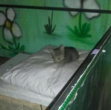 Живодеры снесли домики для бездомных животных, когда те находились внутри. Случай произошел в Красногвардейском районе Санкт-Петербурга. Местная жительница за свой счет установила во дворе