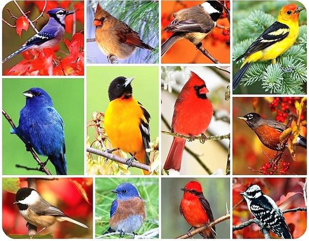 Пение птиц для релаксации и развития ребенка. Коллекция птичьих голосов для детей это уникальный сборник, по которому вы можете научить ребенка различать голоса известных певчих птиц мира. Пение