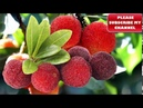 FRUITS NAME IN ENGLISH PART 7 FRUITS NAME ENDING WITH BERRY ENGLISH FOR KIDS