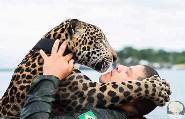В джунглях Амазонки солдаты бразильской армии спасли ягуара-подростка, который тонул во время наводнения