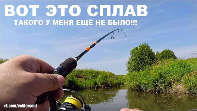 ВОТ ЭТО СПЛАВ Ловля ГОЛАВЛЯ на Малой Реке Рыбалка с Ночёвкой ТУТ ОЧЕНЬ КРУТО Спиннинг