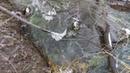Сероводородныйвонючий ручейу Горелой горы. Кемерово