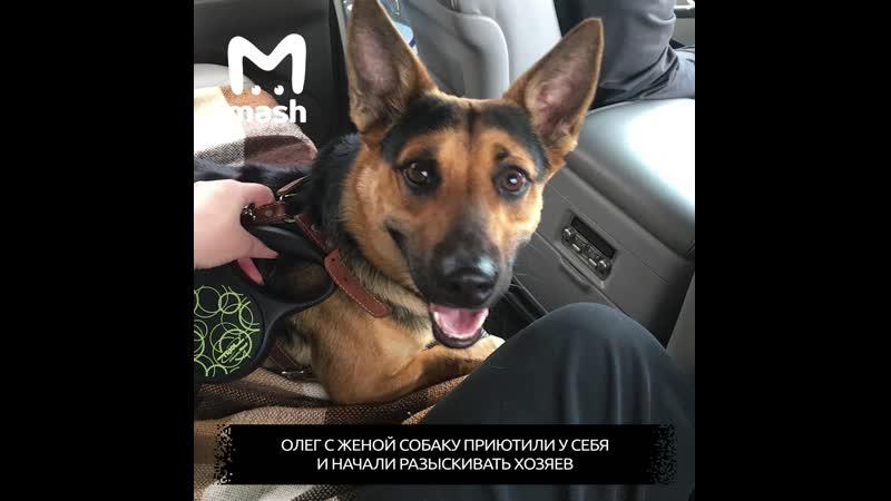Собака потерялась в другом городе спустя месяц её вернули домой