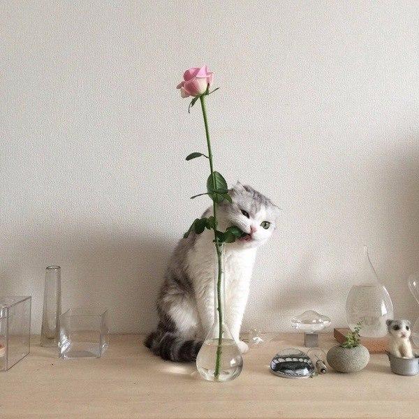 Кот-цветовод
