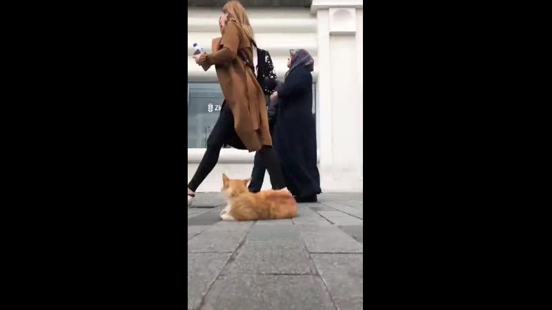İstanbul'da kedi olmak..mp4