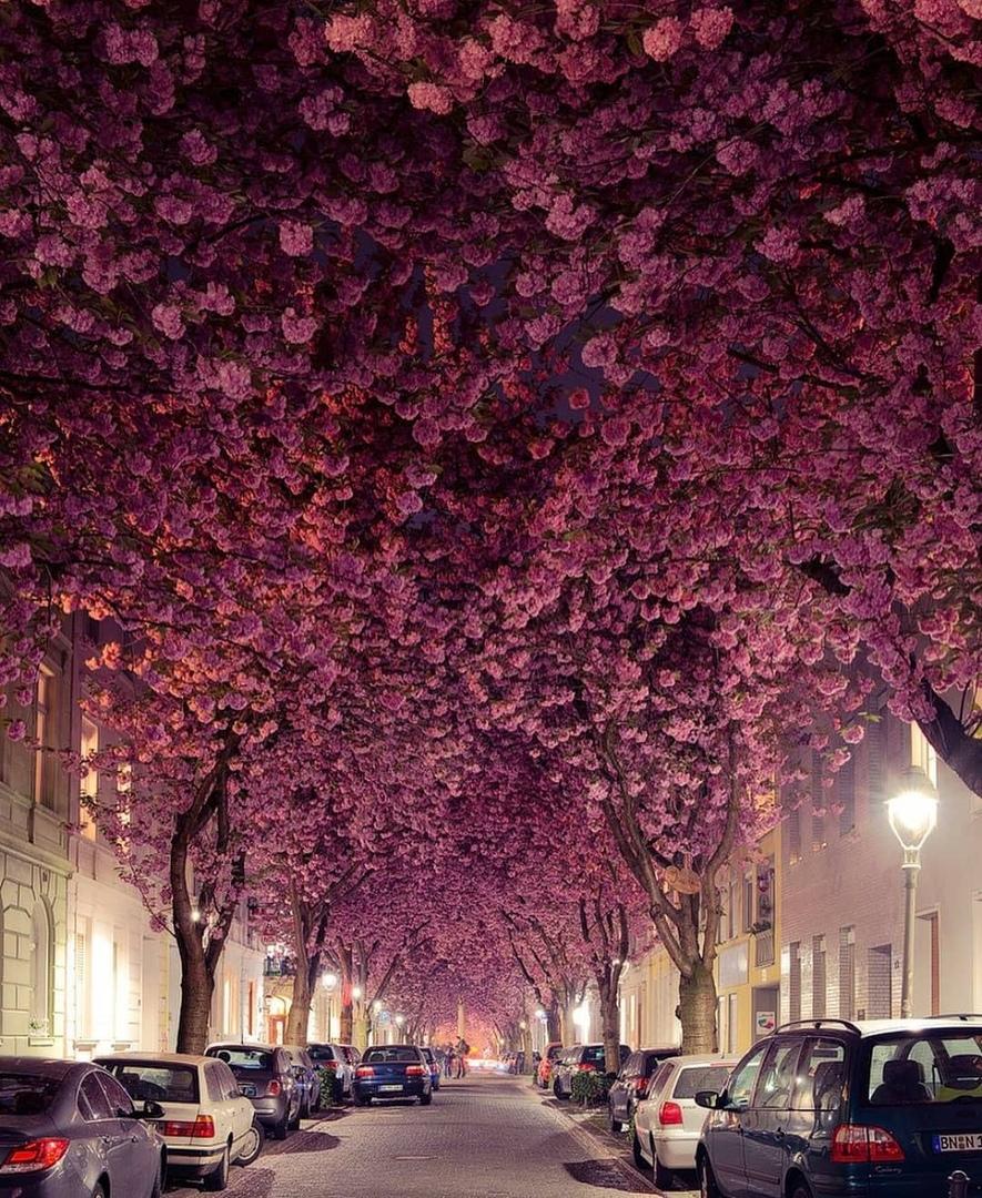 В городе Бонн. Германия