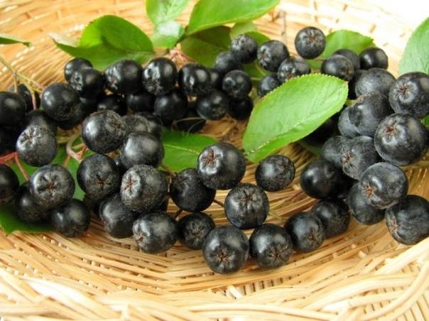 Как сушить черноплодную рябину в домашних условиях Черноплодную рябину, наверное, нельзя назвать самой вкусной ягодой. Однако ее полезные свойства для организма настолько велики, что она