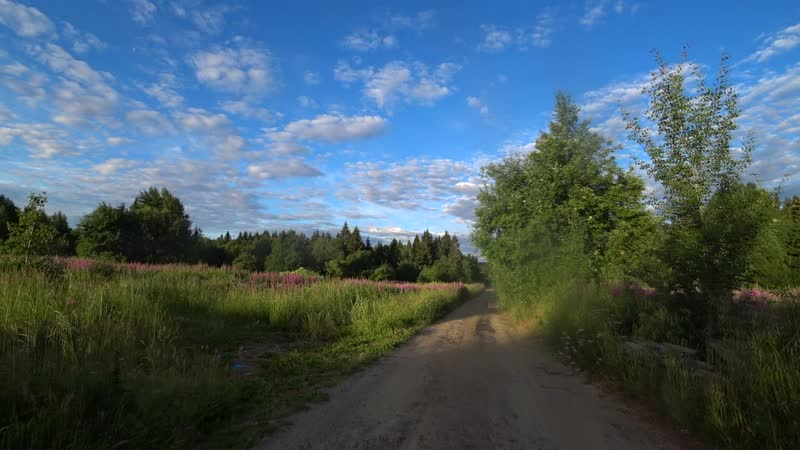 лисица на окраине Петрозаводска