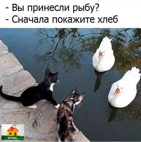 Назначили встречу и пытаются совершить обмен!