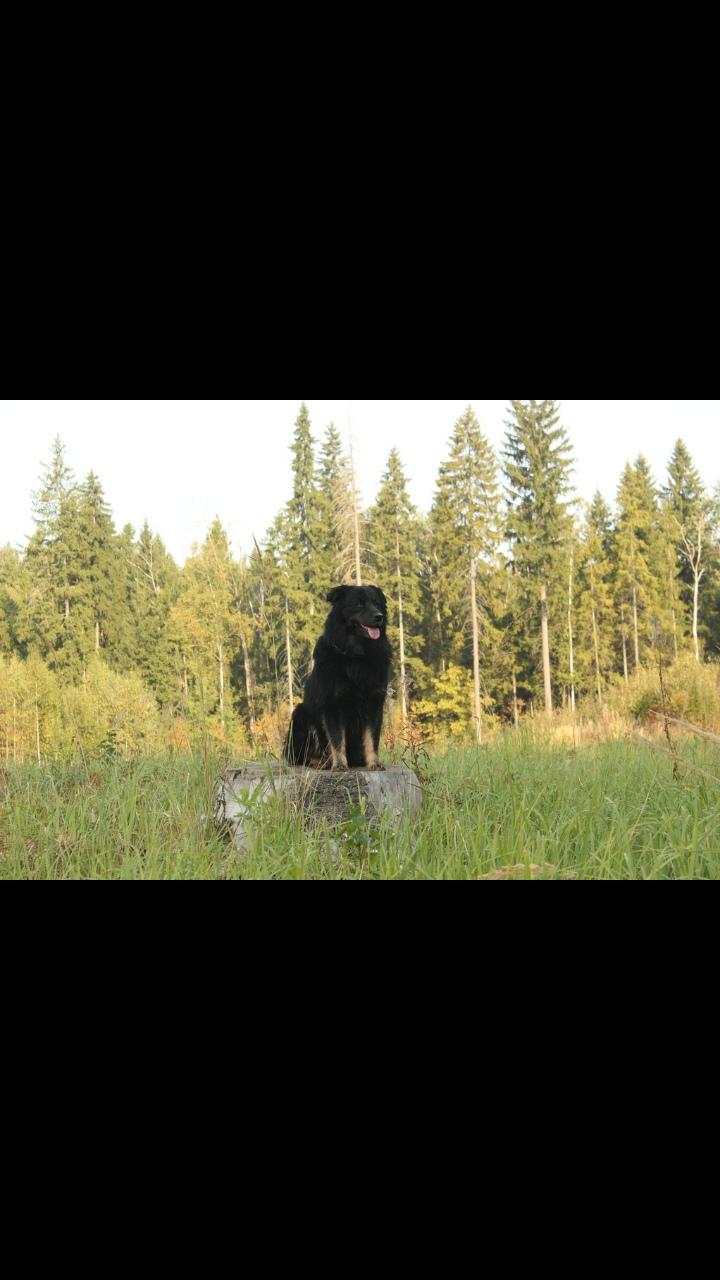 Пропал пес,мальчик,черный,пушистый,метис среднего размера.Лапы желтые. Очень его ищем