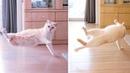 Прыгающий кот захватывающее зрелище