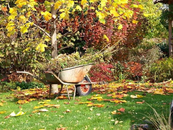 ПОДГОТОВКА САДА К ЗИМЕ Уход за плодовыми деревьями осенью. От мероприятий, проведенных осенью, во многом зависит урожай следующего года. Поэтому не отправляйте деревья на зимовку в неухоженном